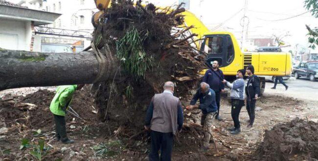 انتقال درخت کهنسال مگلونیا به بوستان گیلانه به روش روتبال